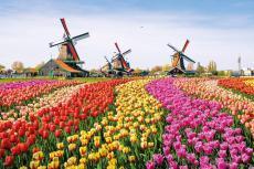 Tulpenfelder mit Windmühlen (Foto: Shutterstock)