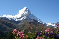 Matterhorn zur Alpenblüte