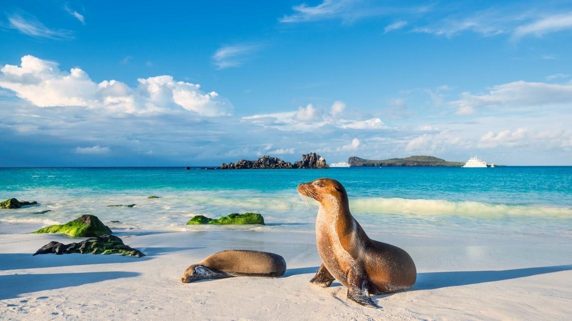 Seelöwen Galapagos Inseln
