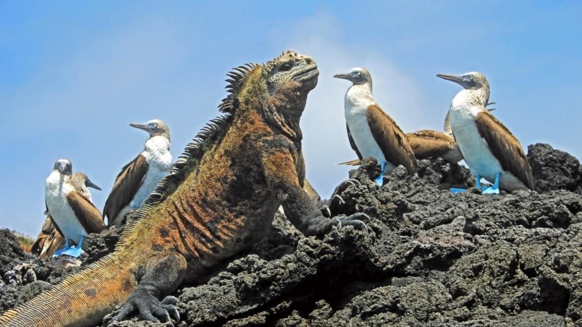 Einzigartige Natur auf den Galapagos Inseln