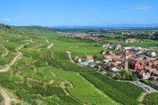 Weinberge bei Colmar in der Elsass