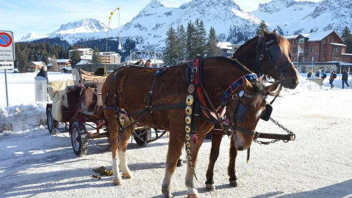 Arosa - Pferdeschlittenfahrt